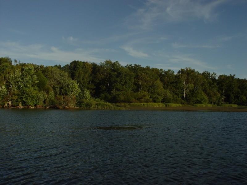 Flw series lake chickamauga co angler ramblings big for Chickamauga lake fishing